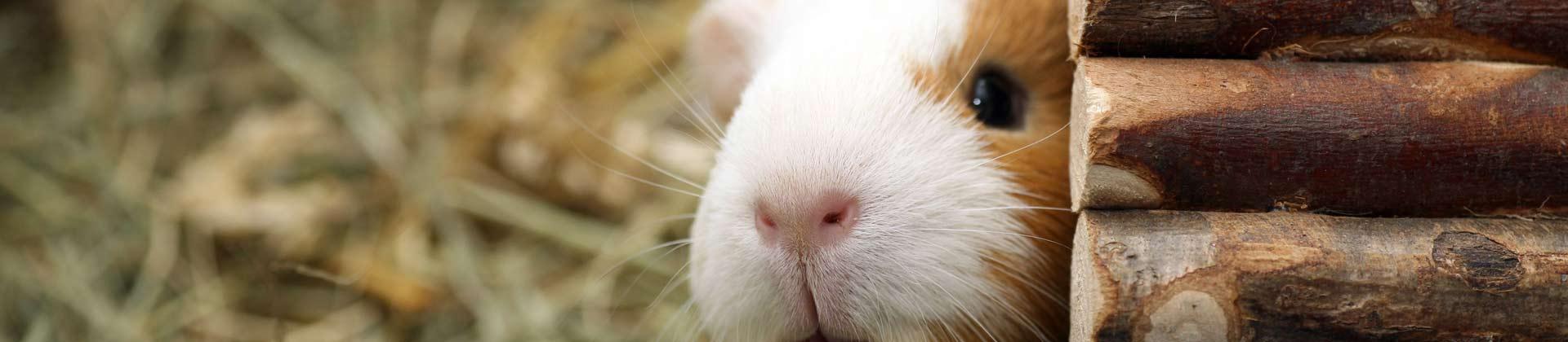 Kleintierstall Hamster und Meerschweinchen