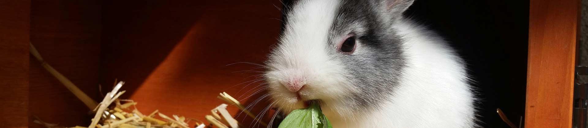 Kleintierstall für Hasen und Kaninchen