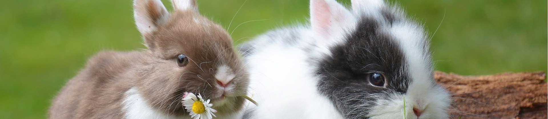 Kleintierstall für Hasen Kaninchen
