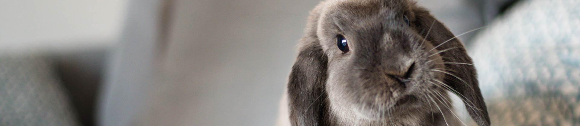 Kaninchenstall winterfest isoliert
