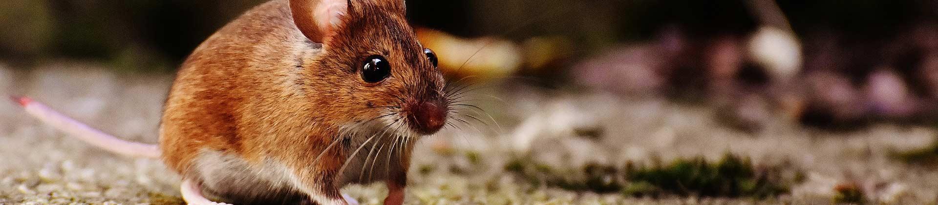 Kleintierstall für Mäuse und Ratten